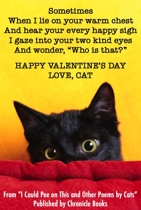 happy valentines day cat happy s day from cats medium large