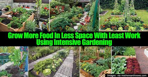 Intensive Gardening by Intensive Gardening Grow More Food In Less Space Least