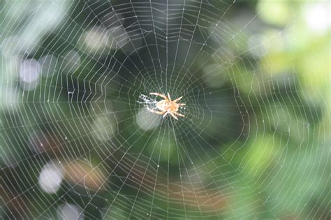 bid web cobweb definition what is