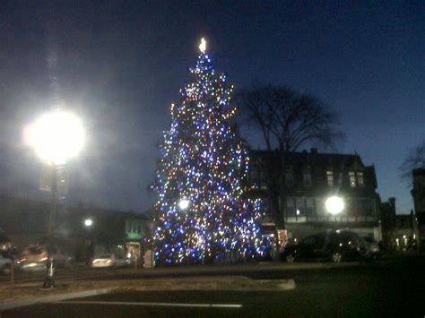 logged netted christmas trees in manchester tree donation sought
