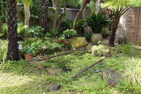 backyard frog pond frog pond 187 jan s garden