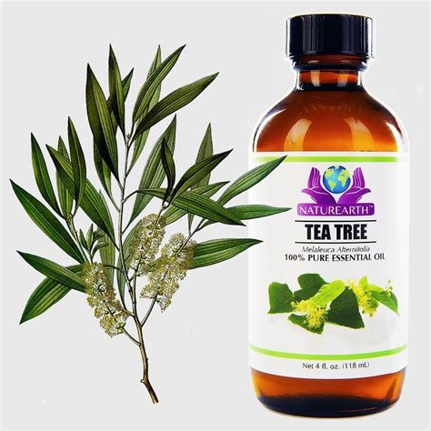 Is Tea Tree Oil Effective For Bed Bugs