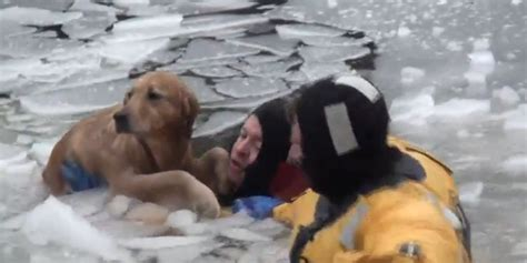 puppy rescue ma firefighters take icy plunge to rescue in heartwarming huffpost