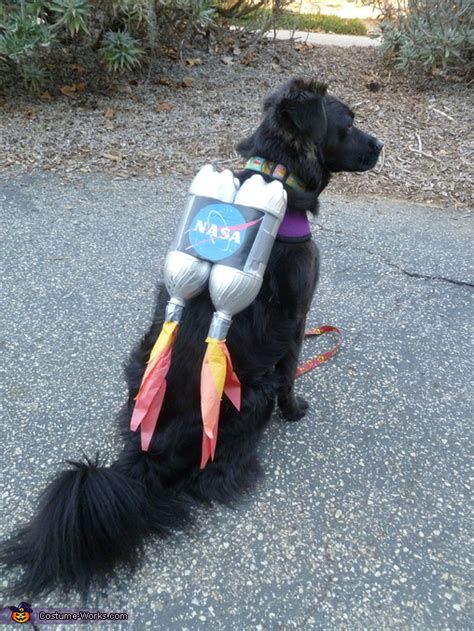 ten dangerously adorable diy dog costumes frugal beautiful