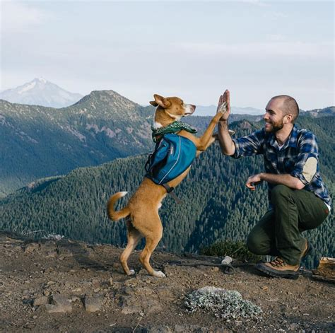 instagram dog cing with dogs hiking on the moon