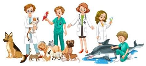 vets near me animal vet for your pet united veterinary center