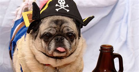 pig the pug costume ideas 50 purrfect costume ideas for your pet
