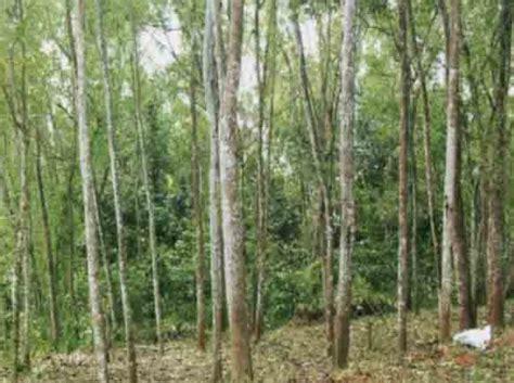 Dipan Kayu Akasia beberapa jenis kayu ini sangat terkenal akan kualitas