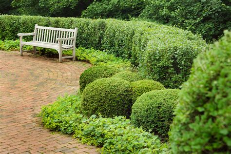 shrubs the top varieties for hedges brighter blooms nursery blog