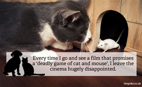 cats are and more observations 10 observations about cats and dogs the poke