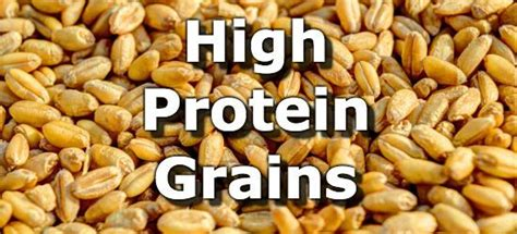 whole grains with the most protein grains with the highest protein to carbohydrate ratio