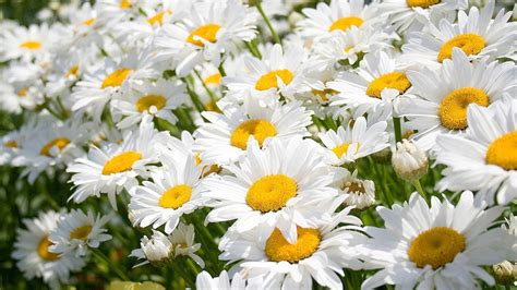 images of flowers images of nature and flowers collection for free download
