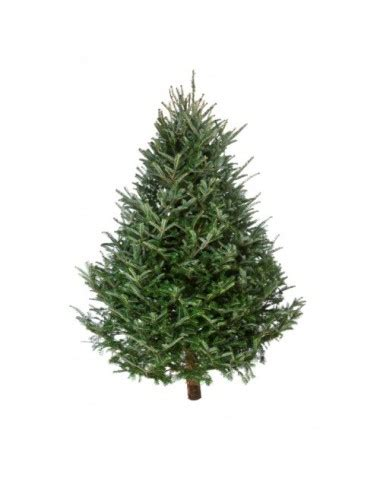 real christmas tree prices 2018 tree shortage 187 thunder radio