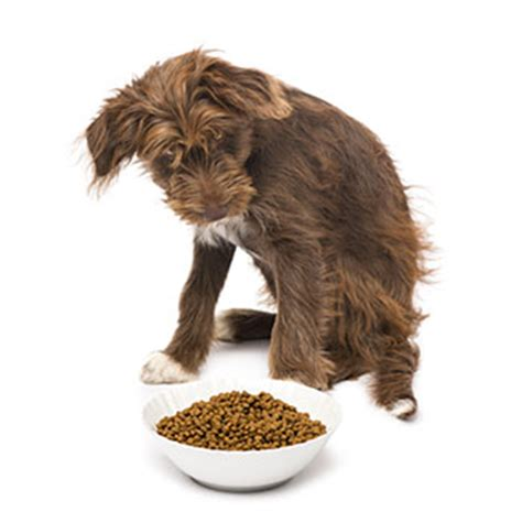 best kibble for dogs think you can avoid pet foods made in china think again dogs naturally magazine