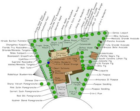 fruit tree orchard layout fruit orchard layout home homestead dreams