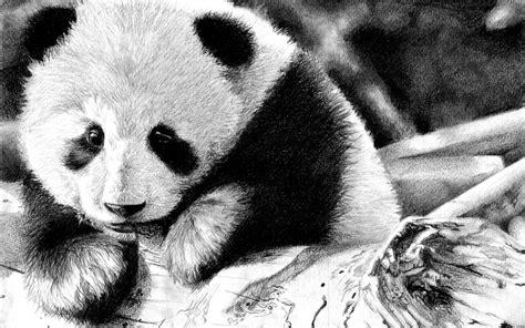 wallpaper black and white panda panda full hd fond d 233 cran and arri 232 re plan 2560x1600
