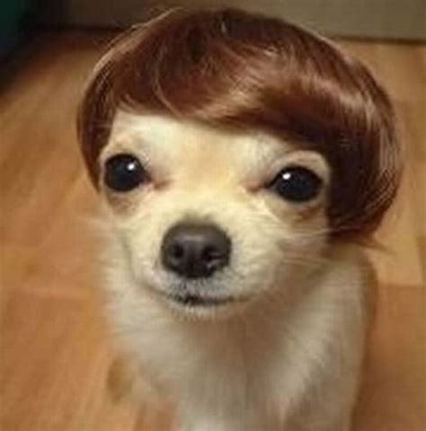 human hair dog cut pics the 34 most hilarious but awful pet haircuts blazepress