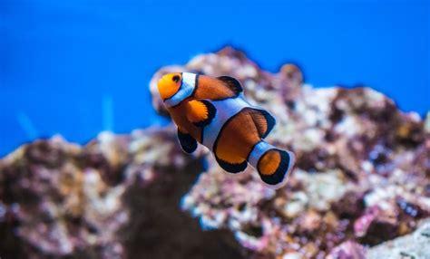 imagenes bonitos de niños los animales m 225 s bonitos del mar im 193 genes animales