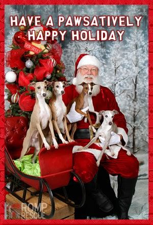 animals  quotes christmas sayings quotesgram