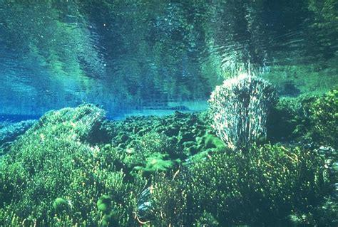 imagenes de paisajes acuaticos paisajes acuaticos imagui