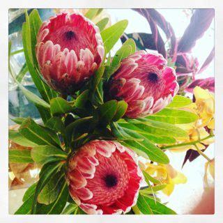 fiori per chiedere scusa fiori per chiedere perdono