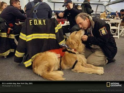 comfort dogs on airplanes 1000 images about new york 9 11 on pinterest flight