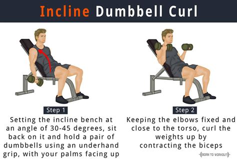 incline bench dumbbell curl incline dumbbell curl how to do benefits forms video