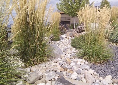Colorado Backyard Landscaping Ideas by Best 25 Xeriscaping Ideas On