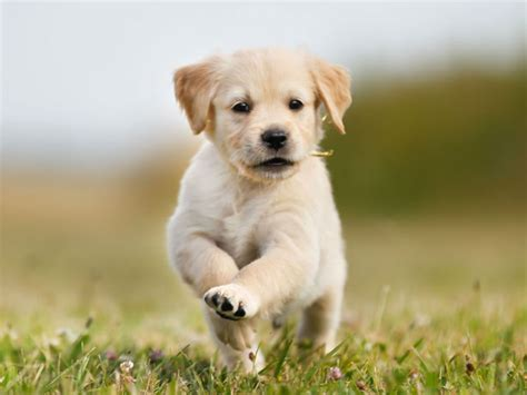 puppy pic how to establish a routine and boundaries with your puppy american kennel club