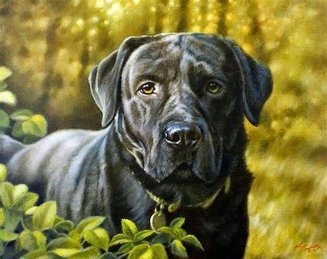 cuadros de perros al oleo pintura moderna y fotograf 237 a art 237 stica retratista de