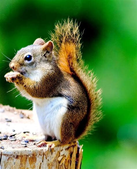very interesting facts about squirrels animal fun facts