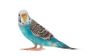 Bird Supplies: Accessories & Products for Birds   PetSmart