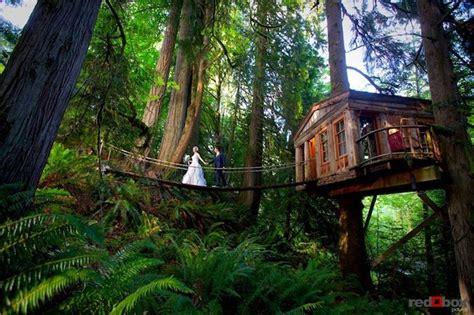 rainforest hotel built   trees tree house point