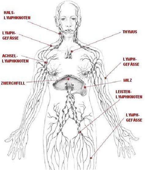 wo liegen die lymphknoten lymphknoten am hals tastbar und manchmal leicht gewchwollen
