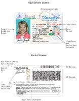Department Of Safety Drivers Records Tennessee Safety Department Of Driver License Progs
