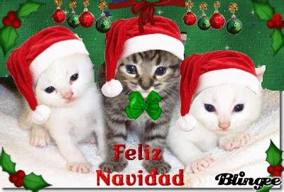 imagenes navidad gatitos navidad gatuna fotograf 237 a 103986726 blingee com
