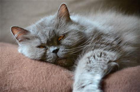 katzenhaltung in der wohnung katzenhaltung in der wohnung darauf muss achten