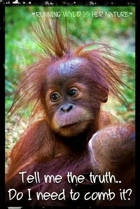 Sexy Monkey Meme - the 25 best monkey memes ideas on pinterest dispatcher