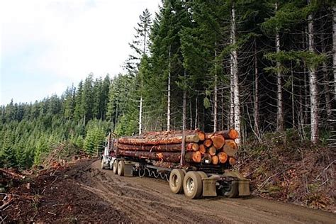 wood groups praising   storey construction limit