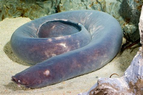 contoh laporan zoologi invertebrata laporan vertebrata aghnata biologi zoologi invertebrata