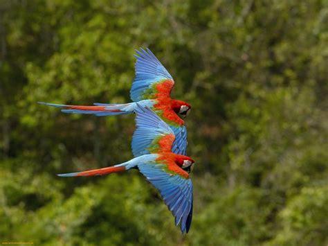 Colorful Birds Flying ? WeNeedFun