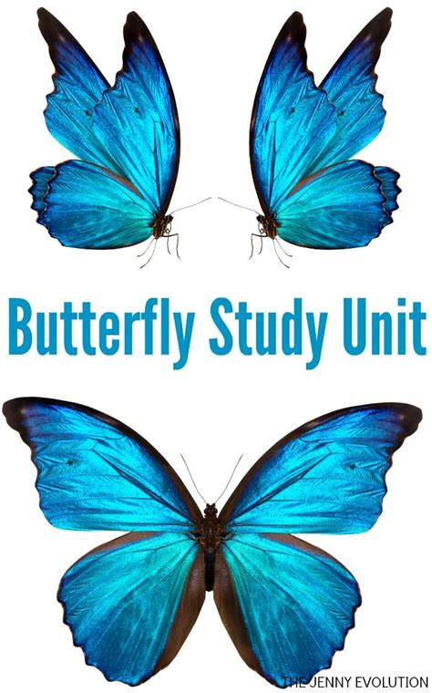 Butterfly P caterpillar butterfly unit study a collection of and