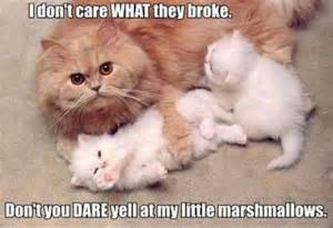 Funny animal memes animal pictures with captions funny animals