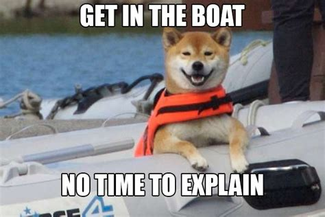 Shiba Inus Meme - shiba inus are weird dogs thechive