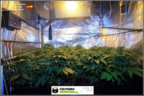 c 243 mo montar un como montar un sistema de cultivo de marihuana hidropnico