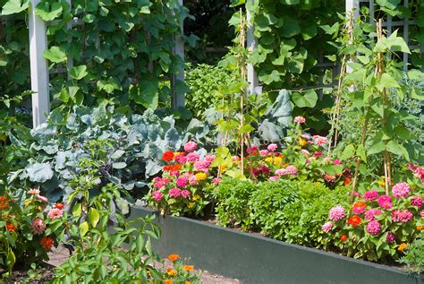 Flowers And Vegetables Garden Plant Flower Stock Flower And Vegetable Garden