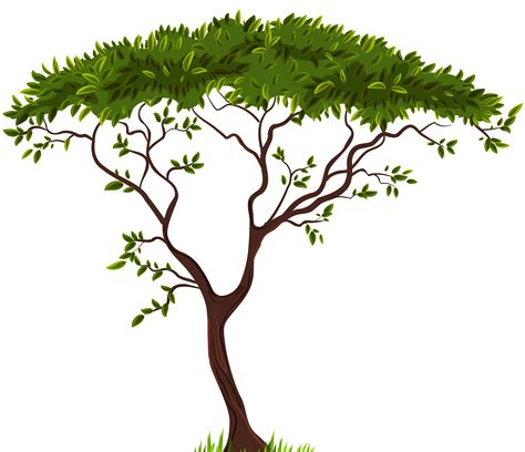 clip tree cypress trees clipart clipground