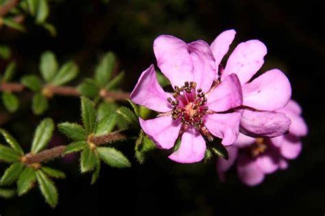 fiori di bach ansia e paura paura fobia ansia come aiutarsi con i fiori di bach e