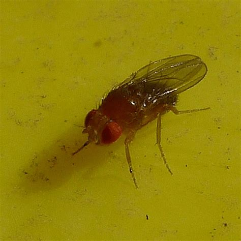 get rid of flies in house how to get rid of fruit flies in house how to get rid of stuff