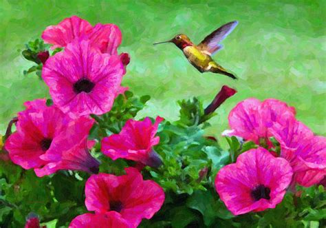 hummingbird and pink petunias by kenny francis